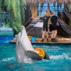 Дельфинарии, океанариумы Тербунов