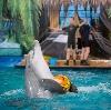 Дельфинарии, океанариумы в Тербунах
